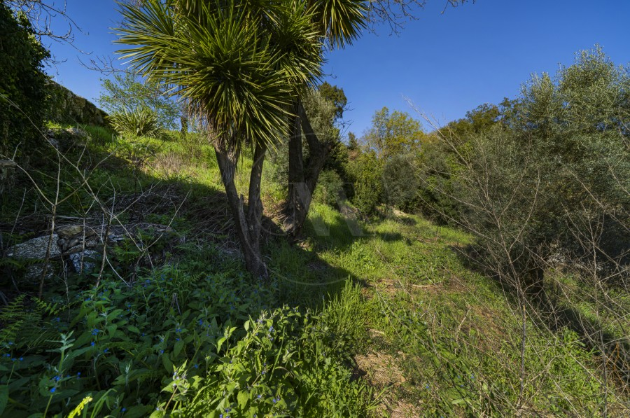 Terreno (Imagem 8)